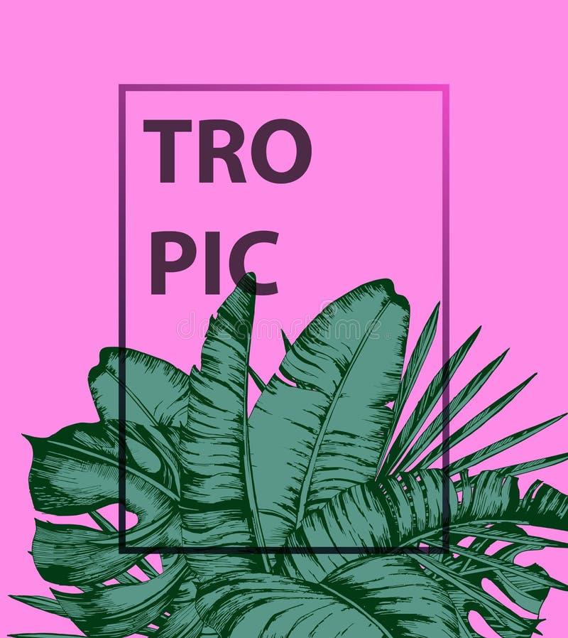 Τροπικά φύλλα φοινικών στο ρόδινο υπόβαθρο Ελάχιστη θερινή έννοια φύσης Επίπεδος βάλτε Καθιερώνον τη μόδα διάνυσμα θερινών τροπικ απεικόνιση αποθεμάτων