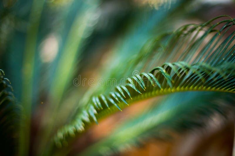 Τροπικά φύλλα φοινικών, φυσικό πράσινο υπόβαθρο Εκλεκτική εστίαση, θαμπάδα στοκ φωτογραφία με δικαίωμα ελεύθερης χρήσης