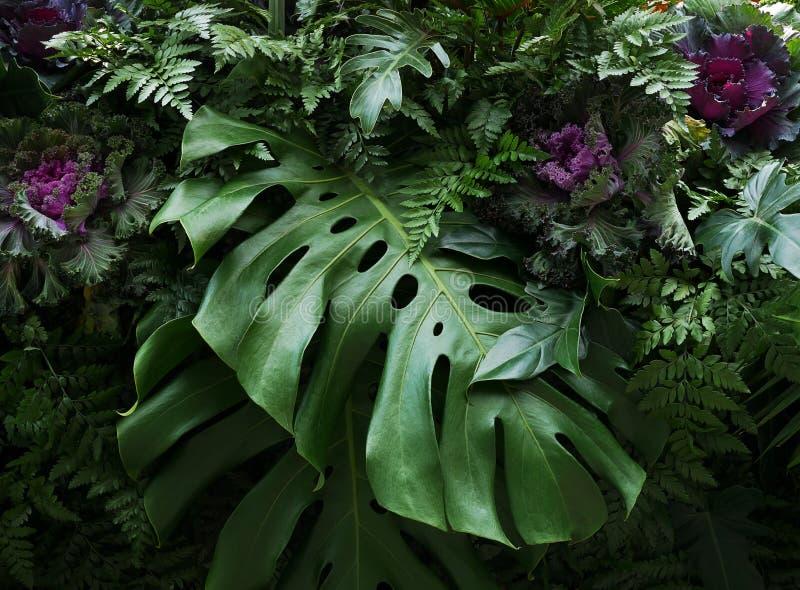 Τροπικά φύλλα Monstera philodendron και διακοσμητικά φυτά Flor στοκ φωτογραφία