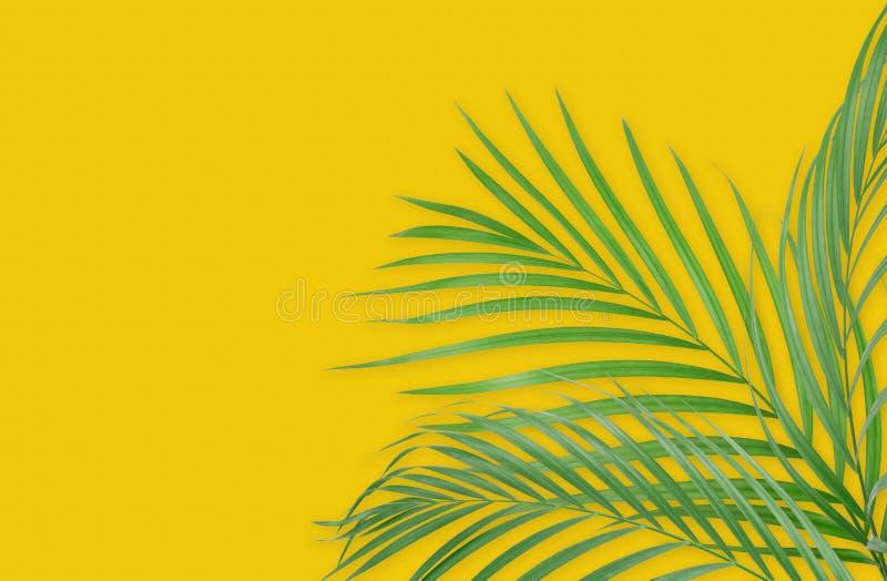 Τροπικά φύλλα φοινικών στο κίτρινο υπόβαθρο Ελάχιστη φύση Summe ελεύθερη απεικόνιση δικαιώματος