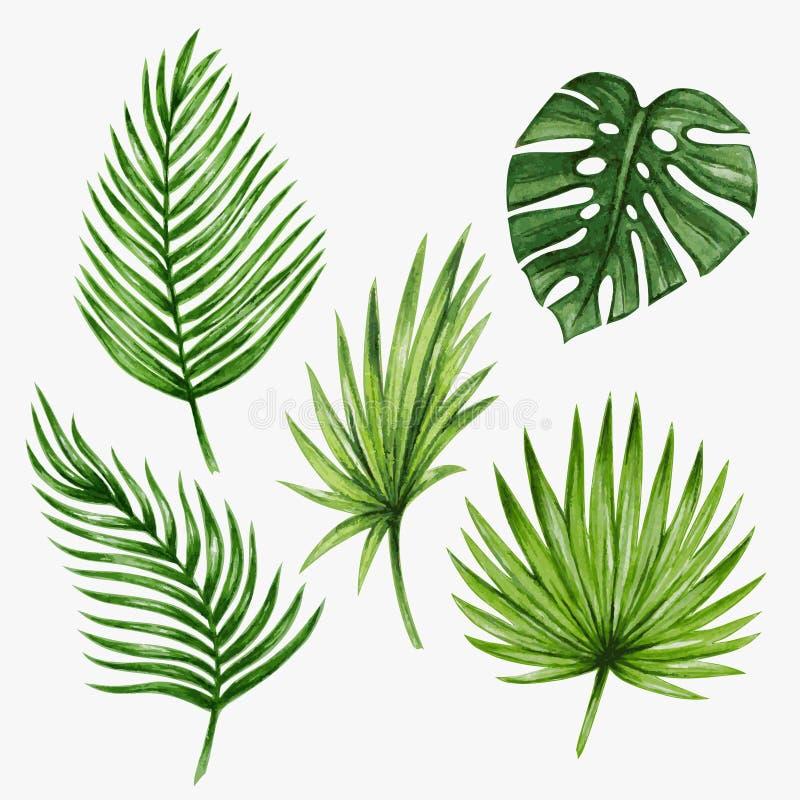 Τροπικά φύλλα φοινικών Watercolor διάνυσμα διανυσματική απεικόνιση