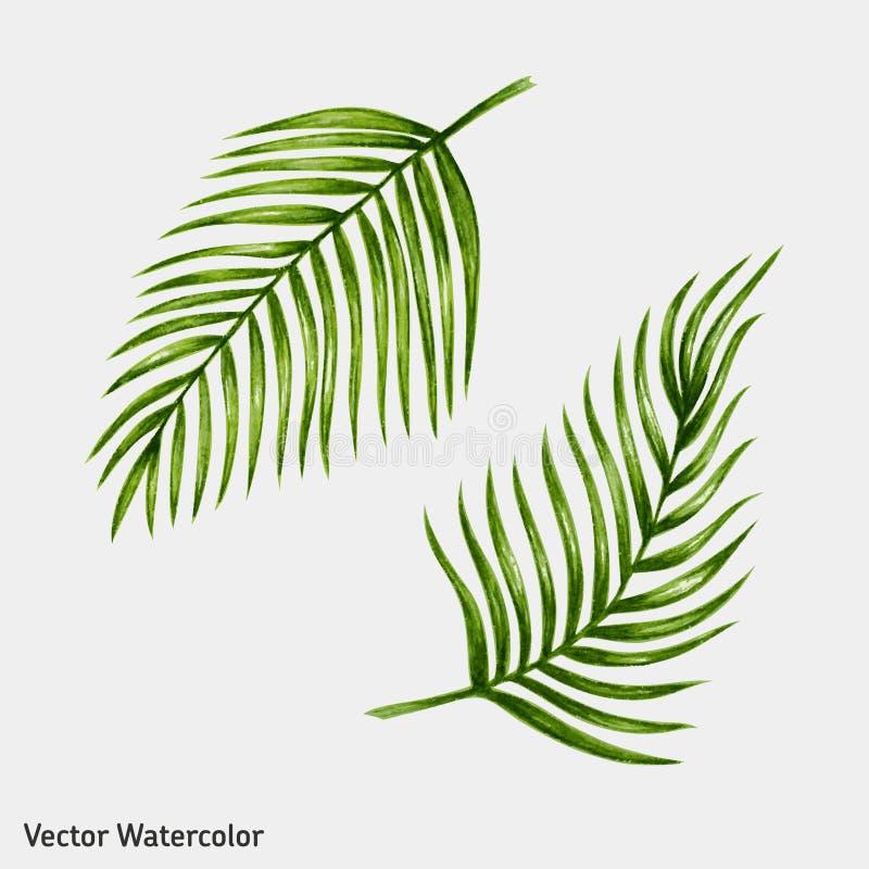 Τροπικά φύλλα φοινικών Watercolor διανυσματική απεικόνιση