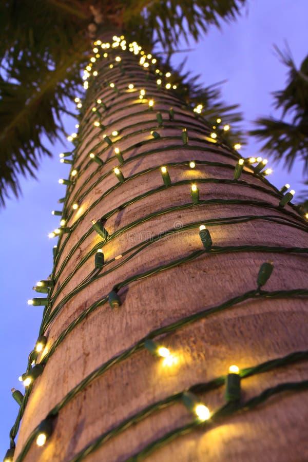Τροπικά Χριστούγεννα στοκ φωτογραφία με δικαίωμα ελεύθερης χρήσης