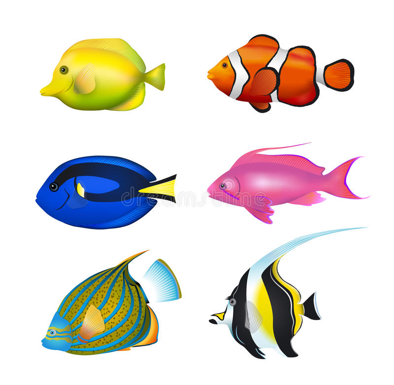 Τροπικά ψάρια καθορισμένα διανυσματική απεικόνιση