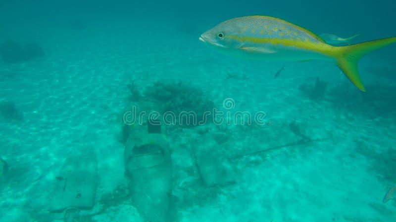 Τροπικά ψάρια και αεροπλάνο στοκ φωτογραφίες με δικαίωμα ελεύθερης χρήσης