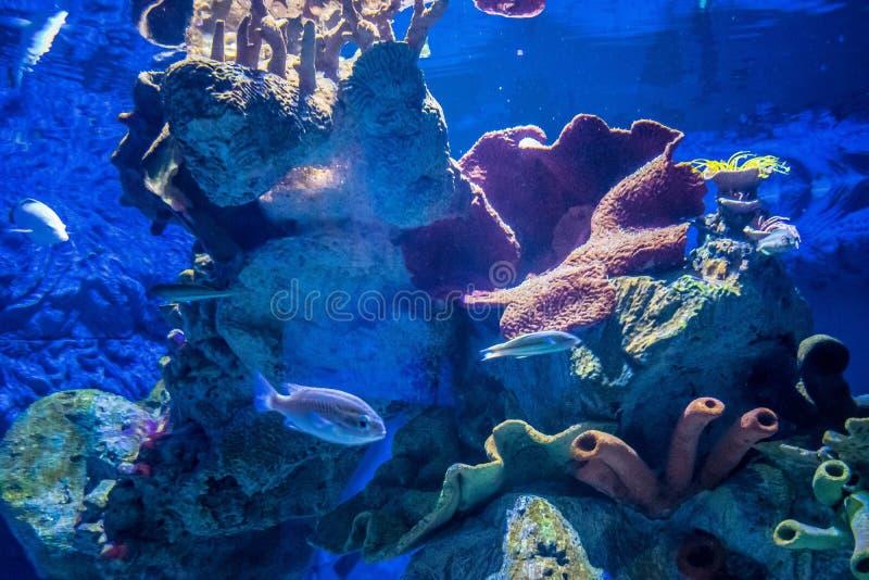 Τροπικά ψάρια σε ένα ενυδρείο με το κοράλλι στοκ εικόνες