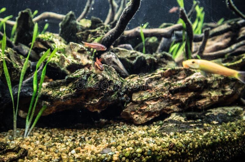 Τροπικά ψάρια στο ενυδρείο στοκ φωτογραφίες με δικαίωμα ελεύθερης χρήσης