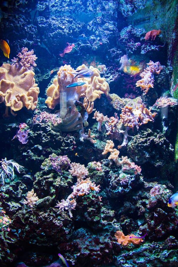 Τροπικά ψάρια στοκ φωτογραφίες με δικαίωμα ελεύθερης χρήσης