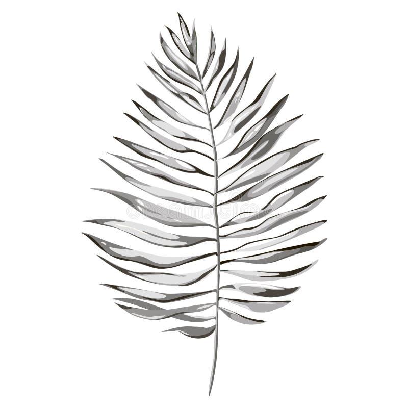 Τροπικές απεικονίσεις φύλλων φοινικών Φύλλα ζουγκλών που απομονώνονται στο άσπρο υπόβαθρο απεικόνιση αποθεμάτων