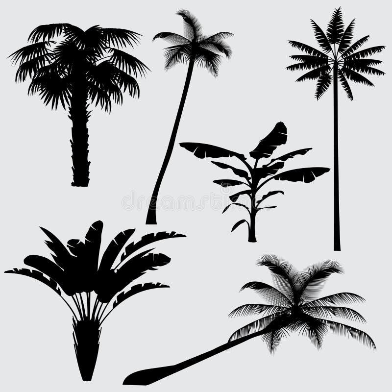 Τροπικές διανυσματικές σκιαγραφίες φοινίκων που απομονώνονται στο άσπρο υπόβαθρο απεικόνιση αποθεμάτων