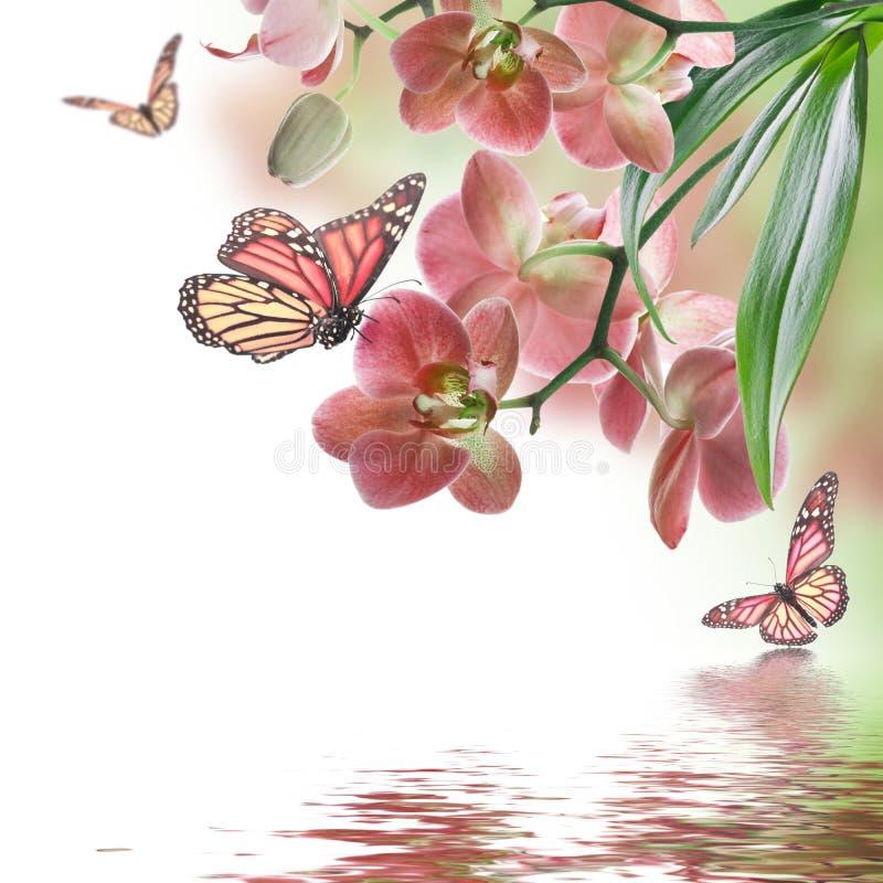 Τροπικές ορχιδέες και πεταλούδα στοκ φωτογραφία