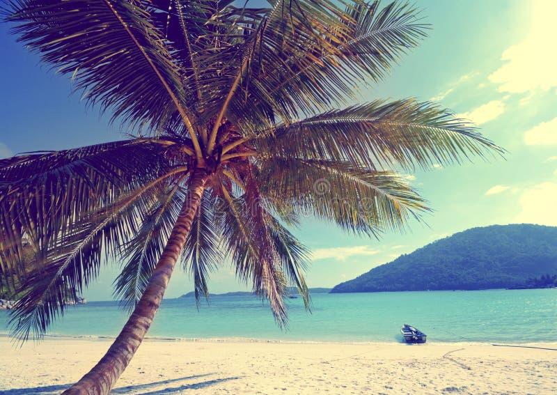 Τροπική έννοια παραθαλάσσιων διακοπών παραδείσου φοινίκων νησιών στοκ εικόνες