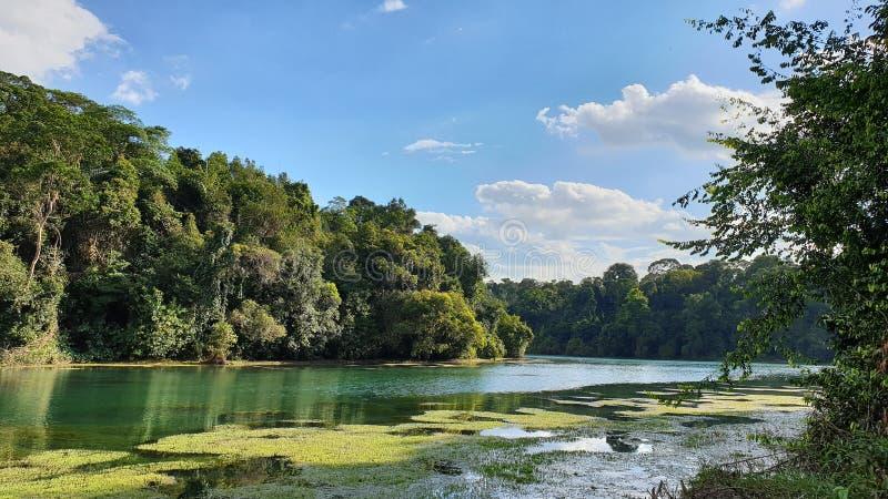 Τροπική δεξαμενή τροπικών δασών στοκ φωτογραφία με δικαίωμα ελεύθερης χρήσης