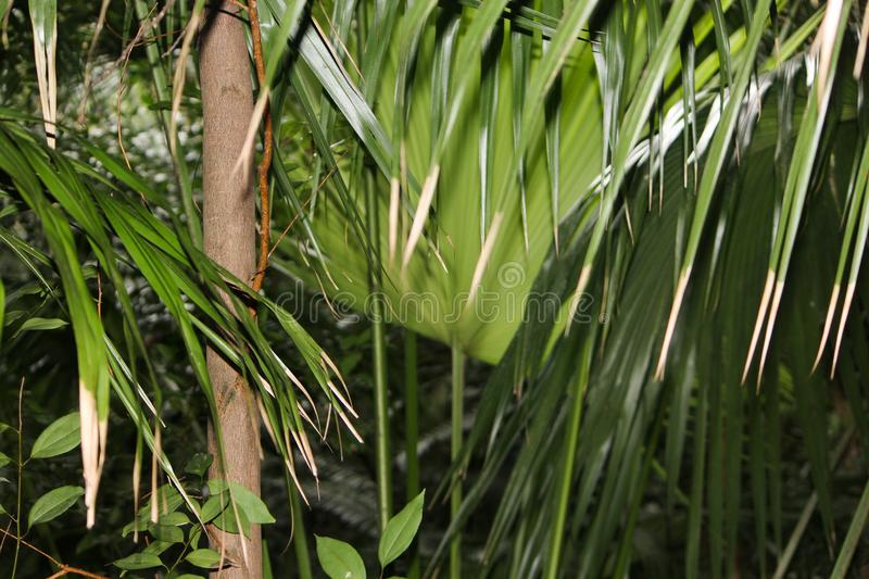 Τροπική ζούγκλα Oahu στοκ εικόνες με δικαίωμα ελεύθερης χρήσης
