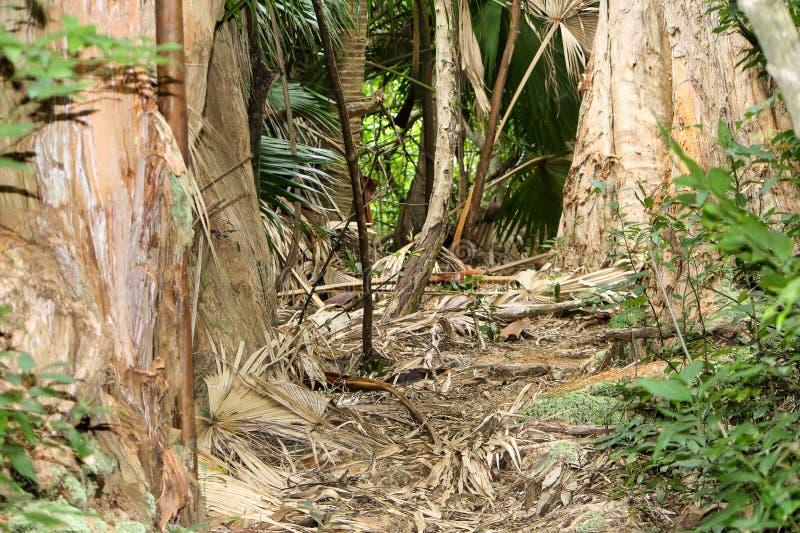 Τροπική ζούγκλα Oahu στοκ φωτογραφίες με δικαίωμα ελεύθερης χρήσης