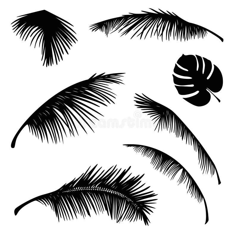 Τροπική διανυσματική σκιαγραφία φύλλων φοινικών διανυσματική απεικόνιση
