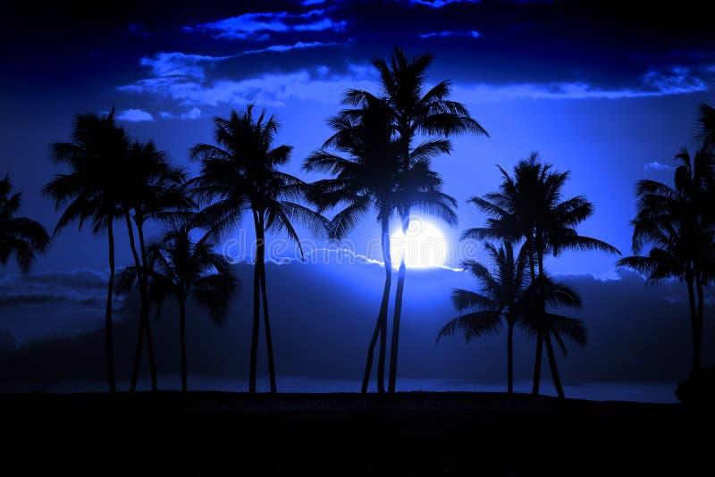 Τροπική νύχτα ανατολής του φεγγαριού μεσάνυχτων πανσελήνων σκιαγραφιών φοινίκων στοκ εικόνες με δικαίωμα ελεύθερης χρήσης