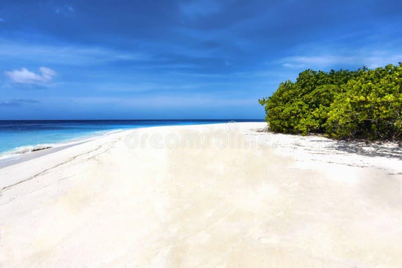 Τροπική παραλία με την άσπρη άμμο στο Maldivian νησί στοκ εικόνες