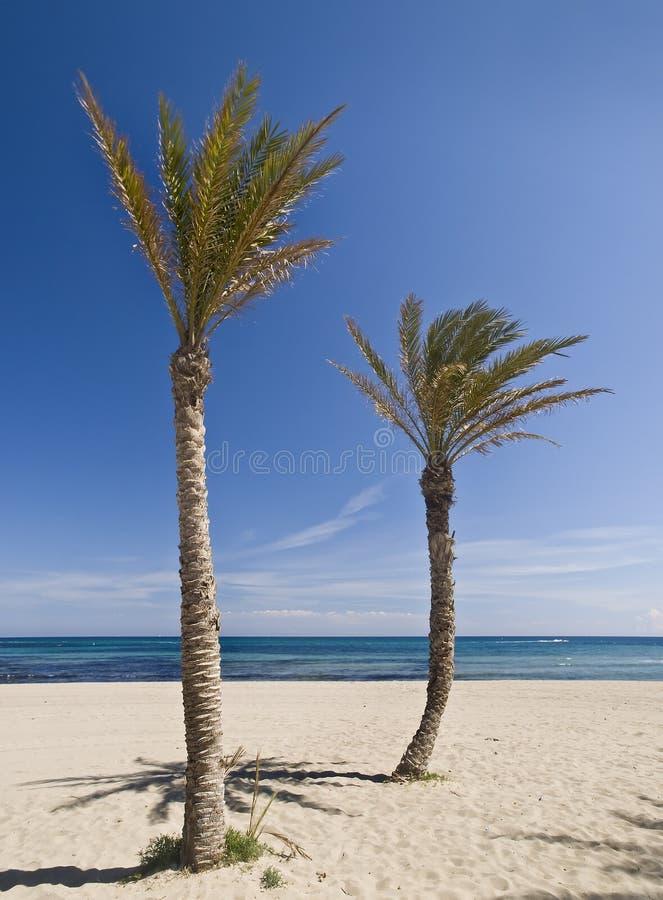 Download Τροπική παραλία στοκ εικόνα. εικόνα από θέρετρο, ηρεμία - 13188085