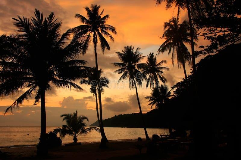 Τροπική παραλία με τους φοίνικες στην ανατολή, λουρί εθνικό μΑ ANG στοκ φωτογραφίες