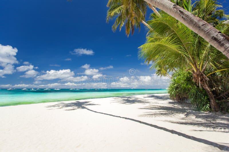 Τροπική παραλία με το φοίνικα και την άσπρη άμμο στοκ εικόνες με δικαίωμα ελεύθερης χρήσης