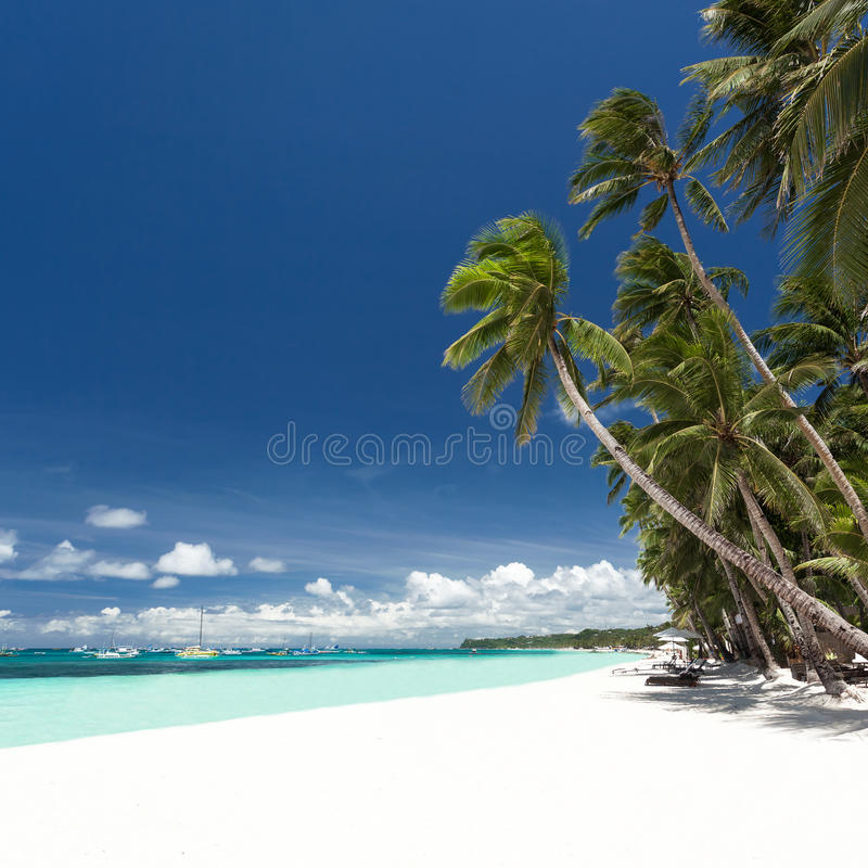 Τροπική παραλία με το φοίνικα και την άσπρη άμμο στοκ εικόνα με δικαίωμα ελεύθερης χρήσης