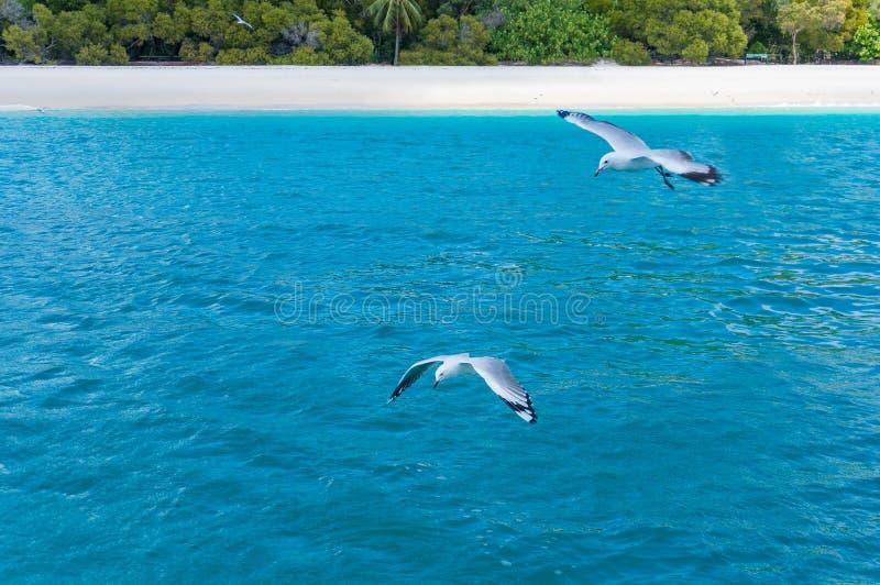 Τροπική παραλία με seagulls πέρα από το τυρκουάζ μπλε νερό στοκ φωτογραφία με δικαίωμα ελεύθερης χρήσης