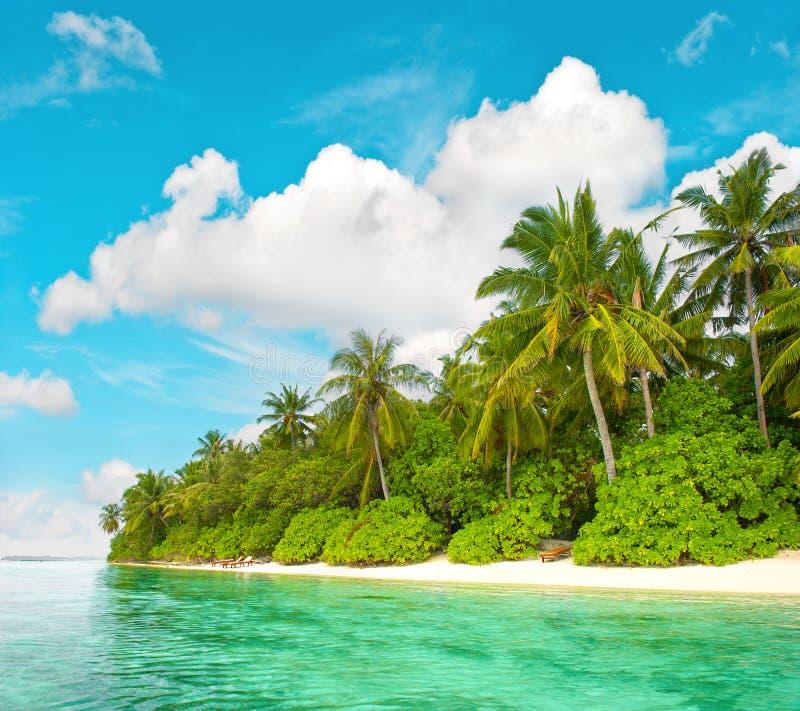 Τροπική παραλία νησιών με το μπλε ουρανό φοινίκων στοκ φωτογραφία με δικαίωμα ελεύθερης χρήσης