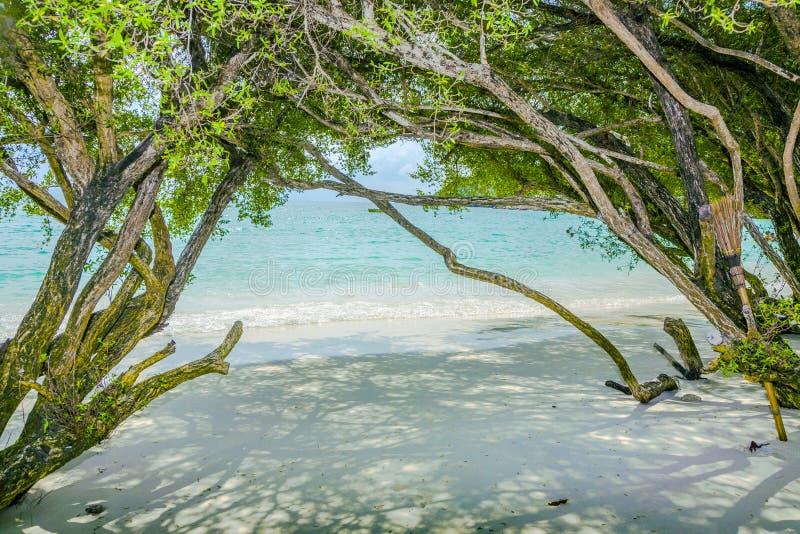 Τροπική παραλία στην Ταϊλάνδη με τα δέντρα στοκ φωτογραφίες με δικαίωμα ελεύθερης χρήσης
