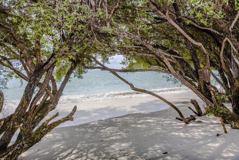 Τροπική παραλία στην Ταϊλάνδη με τα δέντρα στοκ εικόνα