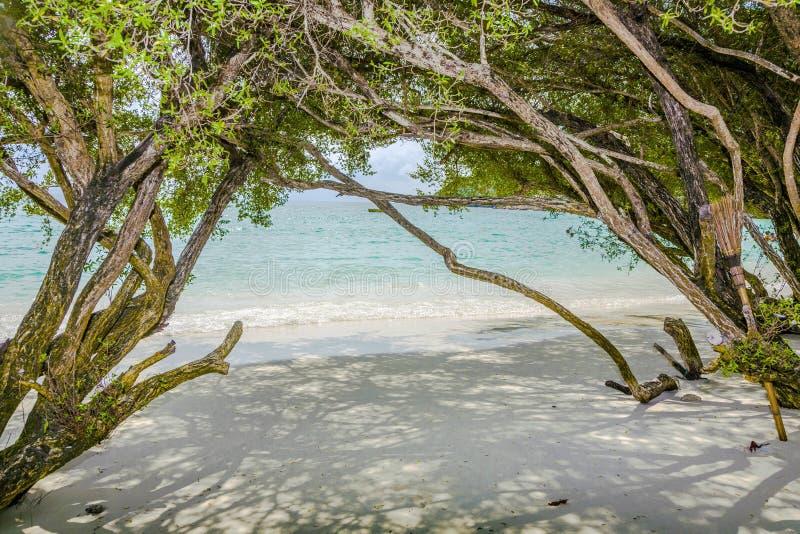 Τροπική παραλία στην Ταϊλάνδη με τα δέντρα στοκ εικόνες