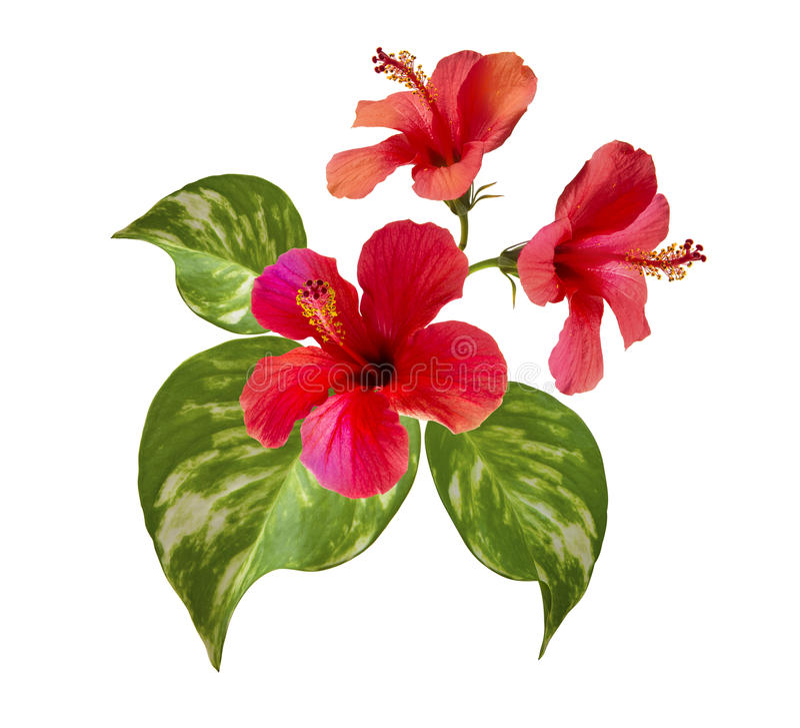 Τροπική ρύθμιση λουλουδιών στοκ φωτογραφία με δικαίωμα ελεύθερης χρήσης