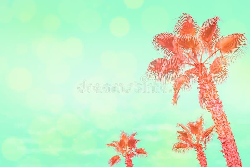 Τροπικοί φοίνικες κοραλλιών στο τυρκουάζ υπόβαθρο ουρανού με τα έντονα φω'τα ήλιων στοκ εικόνα