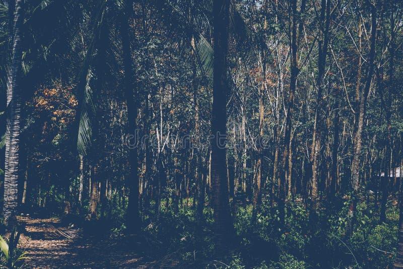 Τροπικοί φοίνικες με τα φύλλα Ώριμες και νέες εγκαταστάσεις στοκ εικόνες