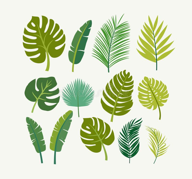 Τροπικοί φοίνικες φύλλων, δέντρα ελεύθερη απεικόνιση δικαιώματος