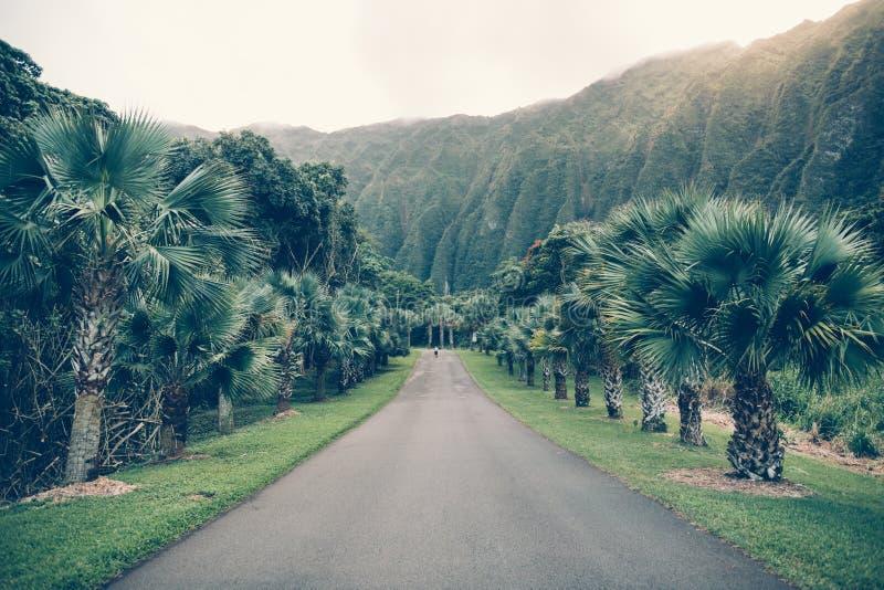 Τροπικός δρόμος ασφάλτου με το φοίνικα και βουνά στο βοτανικό κήπο της Χαβάης Ho'omaluhia στοκ φωτογραφία με δικαίωμα ελεύθερης χρήσης