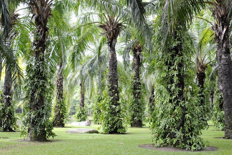 Τροπικός κήπος με το φοίνικα στοκ εικόνα