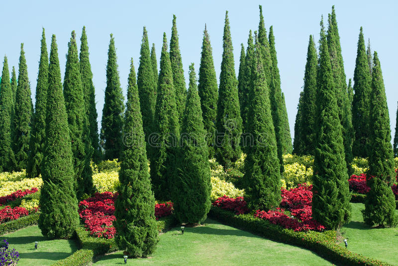 Download Τροπικός κήπος στοκ εικόνα. εικόνα από φυσικός, θάμνος - 22795613