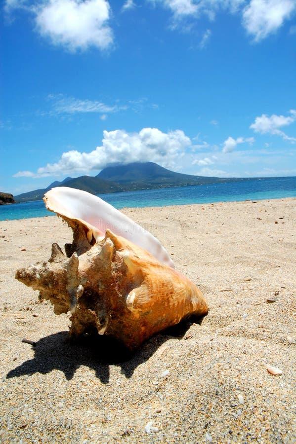 τροπικός κύκλος κοχυλιών θάλασσας παραλιών conch ωκεάνιος στοκ εικόνες
