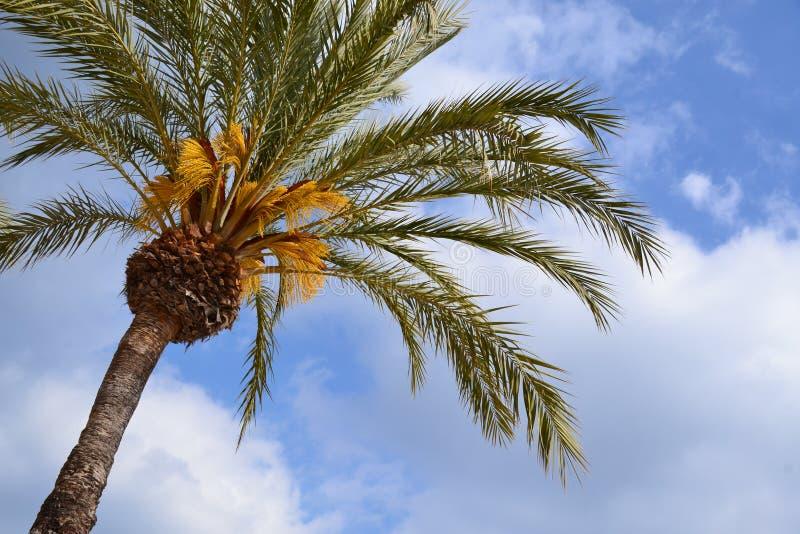 Τροπικός μπλε ουρανός φοινίκων bon στοκ εικόνα