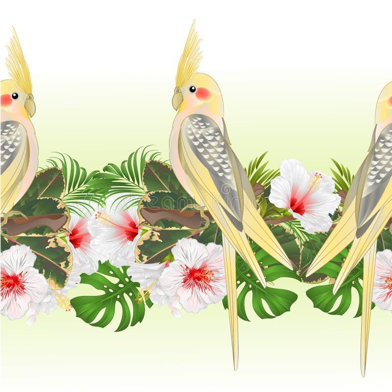 Τροπικός συνόρων άνευ ραφής υποβάθρου κίτρινος αστείος παπαγάλος πουλιών cockatiel χαριτωμένος τροπικός και άσπρο hibiscus ύφος w ελεύθερη απεικόνιση δικαιώματος