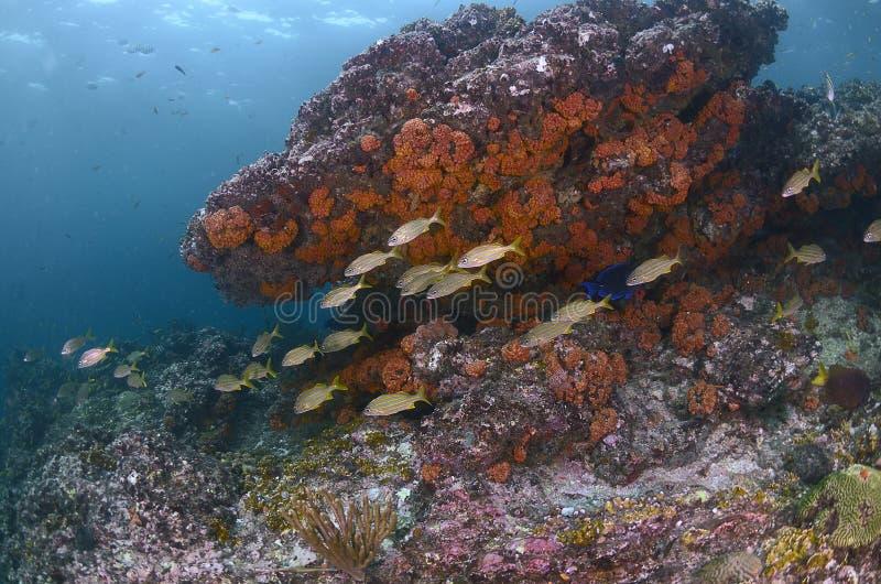 τροπικός υποβρύχιος σκοπέλων τοπίων ψαριών κοραλλιών στοκ φωτογραφία με δικαίωμα ελεύθερης χρήσης
