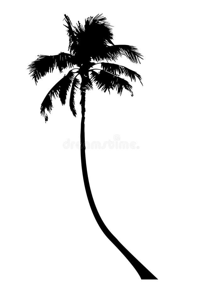 Τροπικός φοίνικας, μαύρα περιγράμματα σκιαγραφιών και περιλήψεων, απομονωμένο διάνυσμα διαφανές ή άσπρο υπόβαθρο απεικόνιση αποθεμάτων