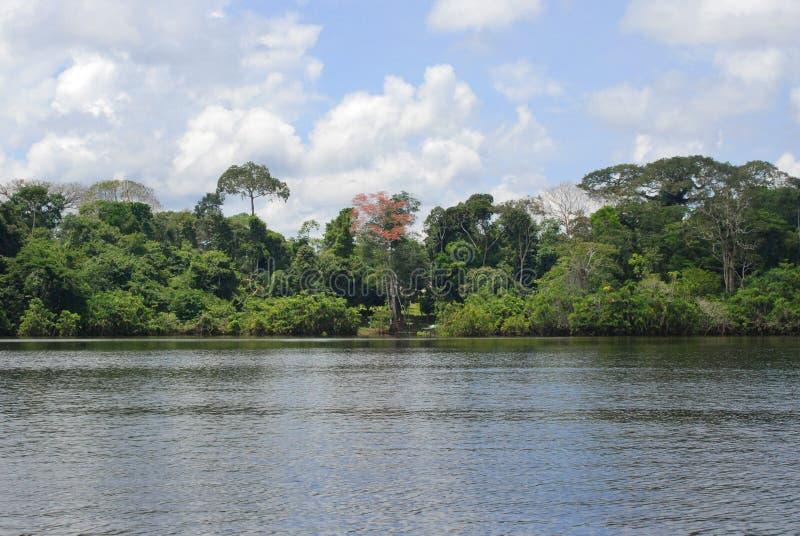 Τροπικό δάσος από τον ποταμό, Αμαζονία, Ισημερινός στοκ εικόνες