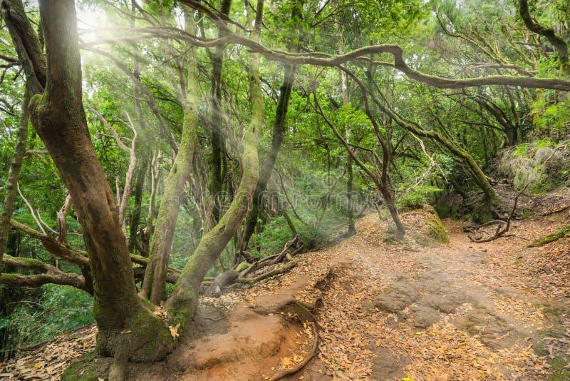 Τροπικό δάσος σε Anaga, Tenerife, Κανάριο νησί, Ισπανία στοκ φωτογραφίες