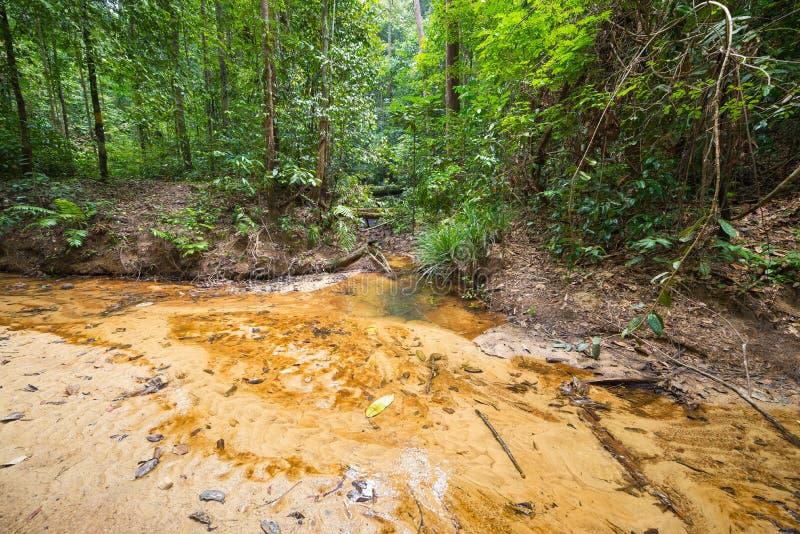 Τροπικό δάσος του Μπόρνεο στοκ εικόνα