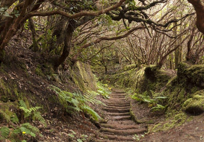 Τροπικό δάσος Anaga Tenerife στοκ εικόνα