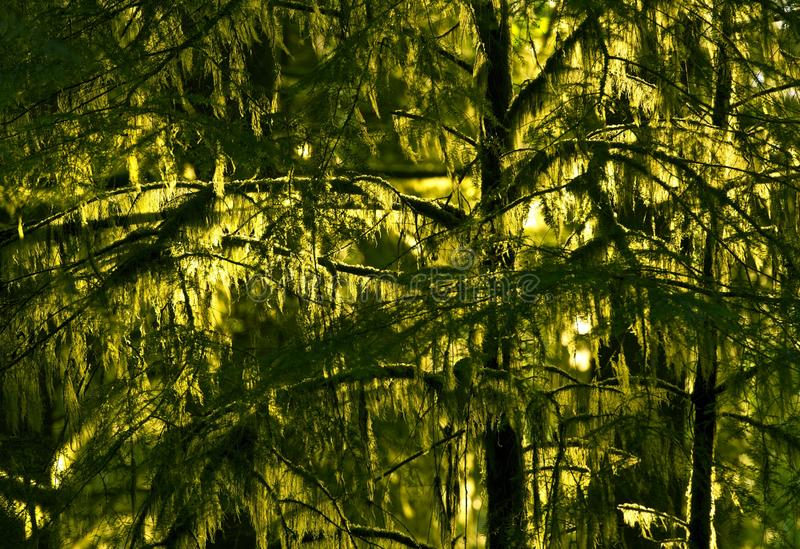 Τροπικό δάσος Pacific Northwest στοκ εικόνα με δικαίωμα ελεύθερης χρήσης