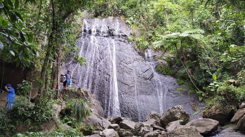 τροπικό δάσος puerto rican στοκ εικόνες