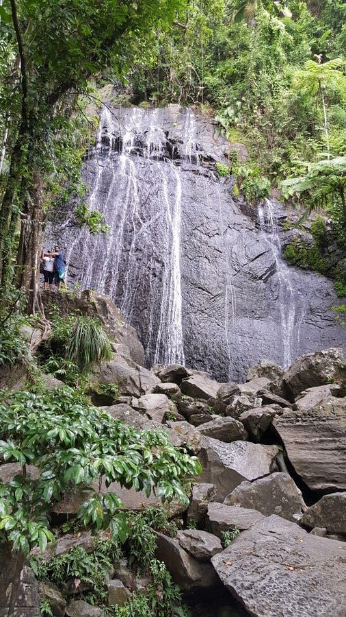 τροπικό δάσος puerto rican στοκ φωτογραφίες